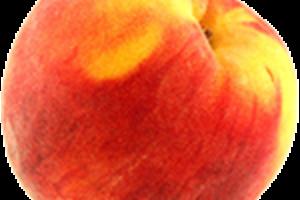 The Elusive Peach
